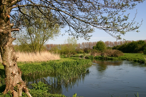 Lower Itchen Fishery river scene
